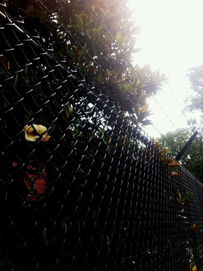 razor wire fence with flowers growing through it