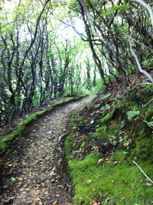 moss-lined path through mountain laurel