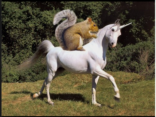 squirrel-on-unicorn1